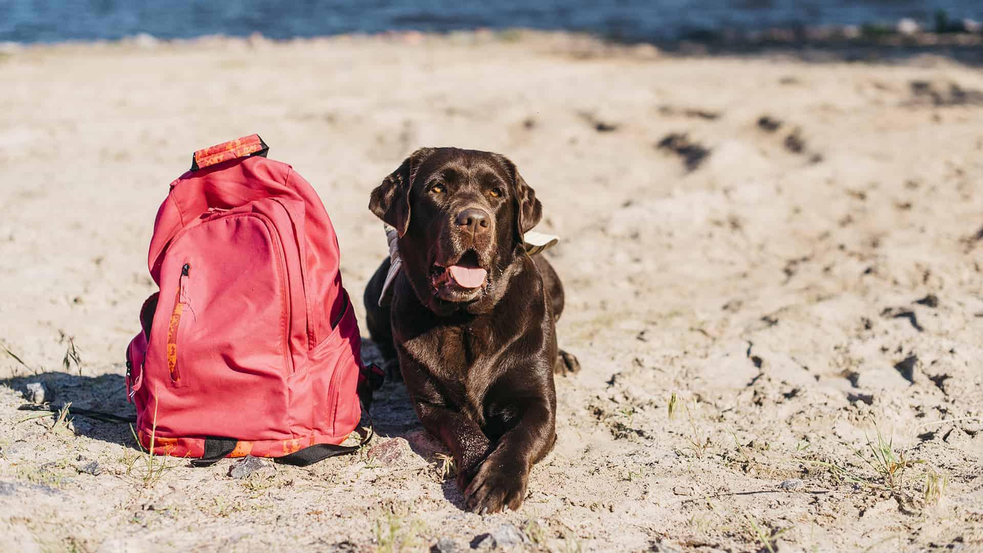 Cane e zaino in spiaggia