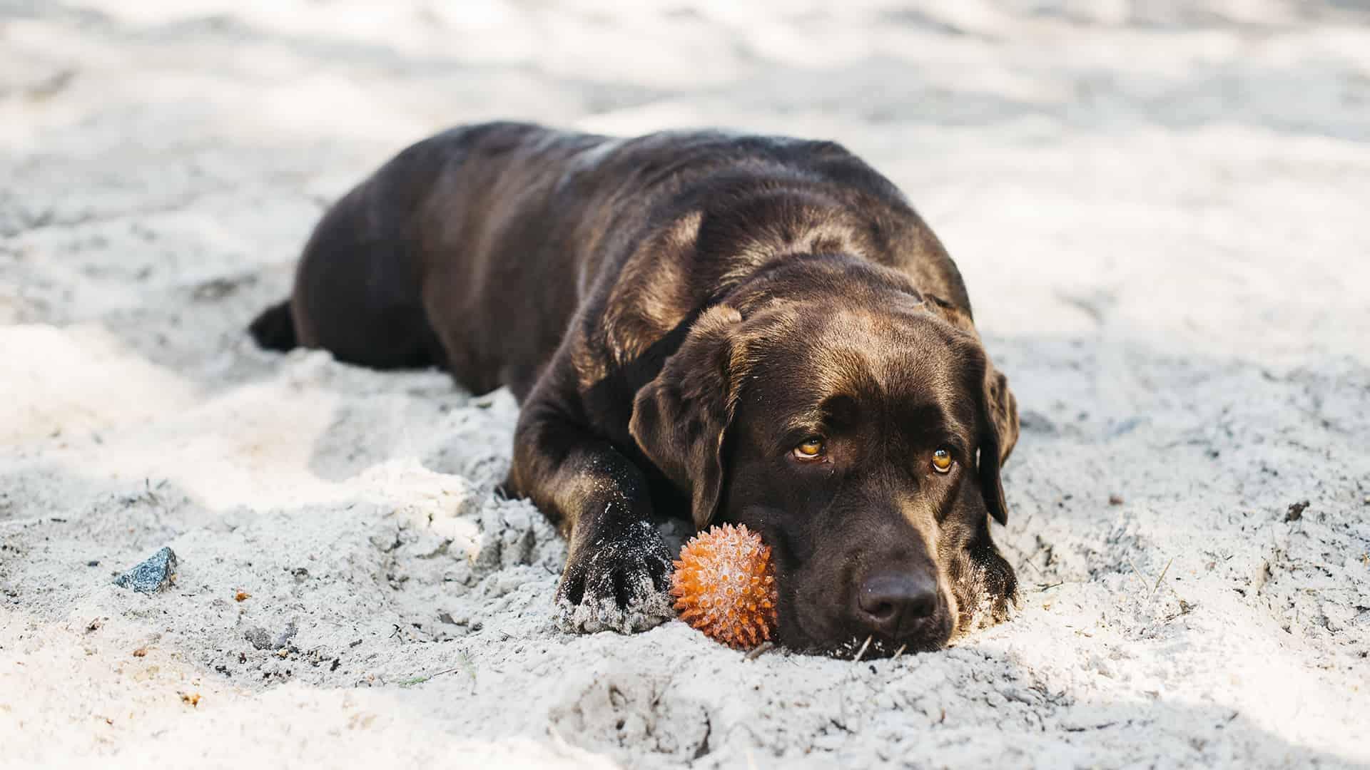 Cane gioca a mare
